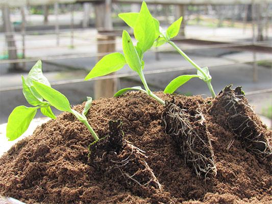 Fertilizantes Radiculares